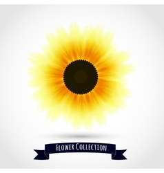 Colorful sunflower isolated on white vector