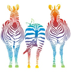 Rainbow zebra vector