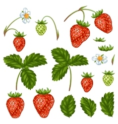Set of red strawberries flowers and leaves vector image