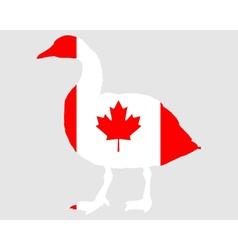 Canada goose vector