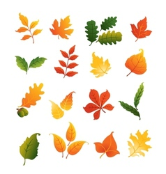 Colourful autumnal leaves set vector
