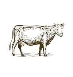 farm animal cow standing sketch dairy farm vector image vector image