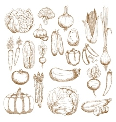 Autumnal abundance of freshly harvested vegetables vector