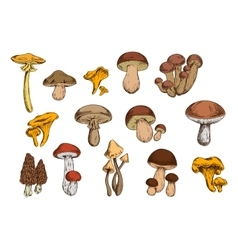 Mushrooms isolated icons set vector