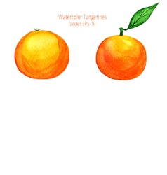 Watercolor tangerines in side view vector