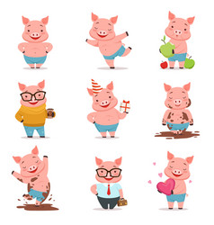 little cartoon pigs characters posing in different vector image