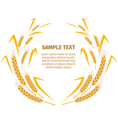 Wheat ears around your text sample on white vector