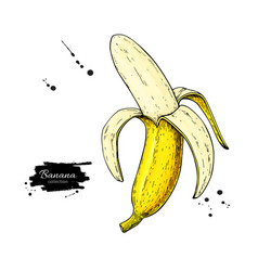 banana drawing isolated hand drawn peel vector image vector image