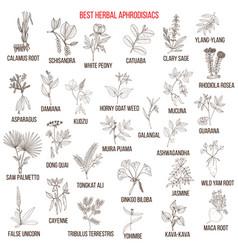 Best natural herbal aphrodisiacs vector