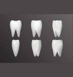 rotation tooth animation frames realistic 3d vector image vector image