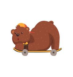 skateboarder bear riding on skateboard in lying vector image