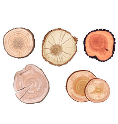 Tree rings vector
