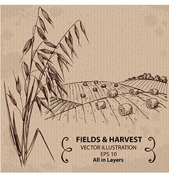 Fields with harvest and oats vector