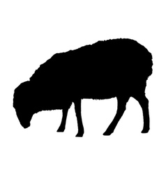 Sheep on white vector image vector image