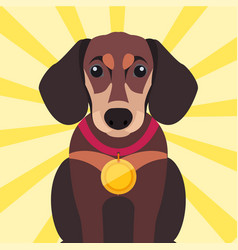 brown dachshund close-up with gold medal on neck vector image
