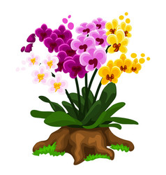 Multicolored orchid flowers growing on a stump vector