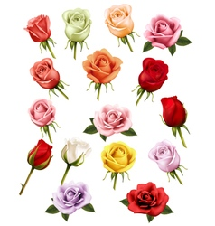 Collection of different roses vector