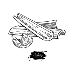 celery stick hand drawn vector image vector image