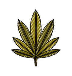 leaf marijuana vector image vector image