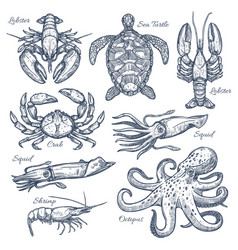 Sea animals and seafood isolated sketch set vector
