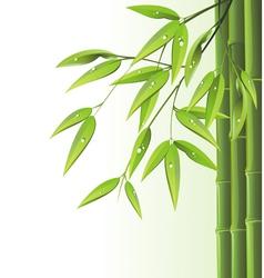 Zen bamboo vector