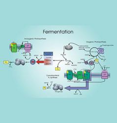 Fermentation process vector