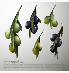 Natural olive tree branches set vector