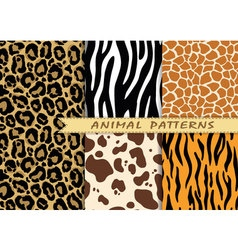 seamless patterns set with animal skin texture vector image