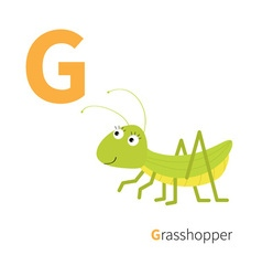 Letter g grosshopper zoo alphabet insect english vector