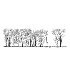 Cartoon drawing of group or alley of poplar trees vector