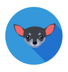small muzzle of chihuahua dog cartoon drawing vector image