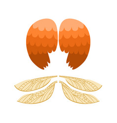 Wings isolated animal feather pinion bird freedom vector