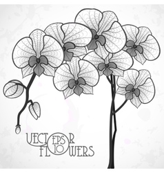Hand drawing orchid flower vector