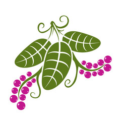 three flat green leaves with tendrils and purple vector image
