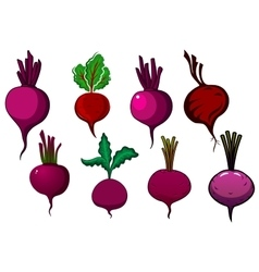 Purple beets vegetables with stalks and leaves vector
