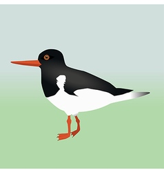 An oyster catcher vector