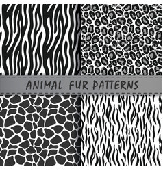 Seamless patterns set with animal skin texture vector