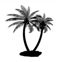 tropical palm silhouette vector image