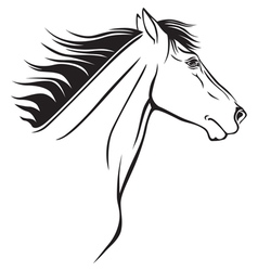 horse nose vector image