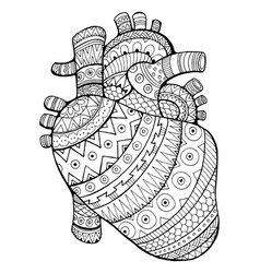 human heart coloring book vector image
