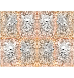 Leopard texture pattern with head vector image vector image