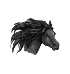 Black mustang horse sketch portrait vector image vector image
