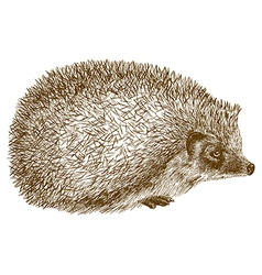 Engraving hedgehog vector