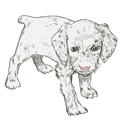 Little puppy on a white background vector