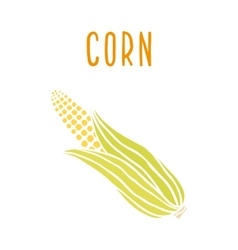 Corn isolated on white vector image