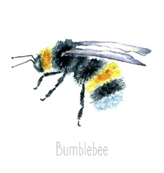 Watercolor bumblebees isolated vector