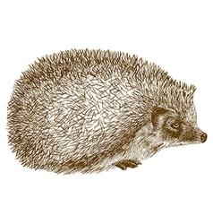 Engraving hedgehog vector