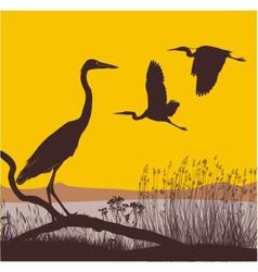 Herons at sunrise vector image
