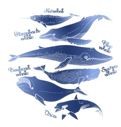 Collection of graphic whales vector