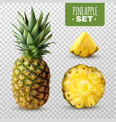 realistic pineapple set vector image vector image